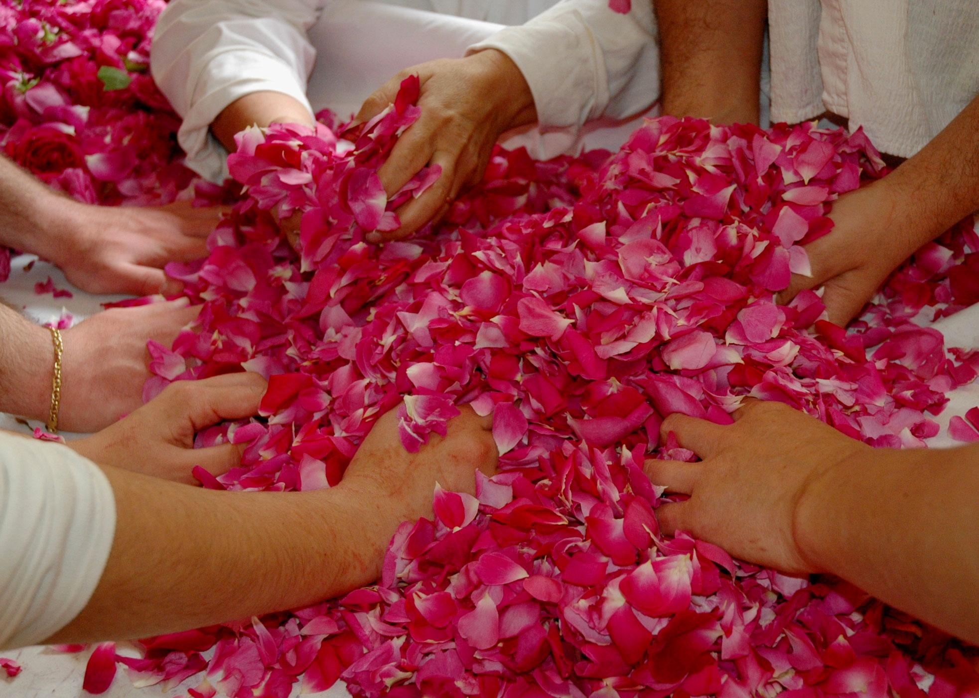 Petali di rosa lavorazione